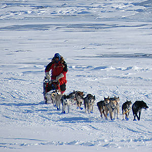 1973: First Iditarod Sled Dog Race is held